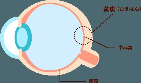 加齢性黄斑変性症イメージ